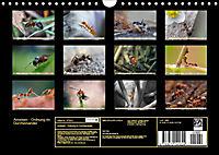 Ameisen - Ordnung im Durcheinander (Wandkalender 2019 DIN A4 quer) - Produktdetailbild 13