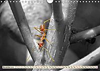 Ameisen - Ordnung im Durcheinander (Wandkalender 2019 DIN A4 quer) - Produktdetailbild 11