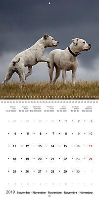 American Bulldog (Wall Calendar 2019 300 × 300 mm Square) - Produktdetailbild 11