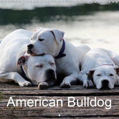 American Bulldog (Wall Calendar 2019 300 × 300 mm Square), Proud Heroes