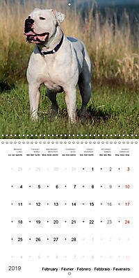 American Bulldog (Wall Calendar 2019 300 × 300 mm Square) - Produktdetailbild 2