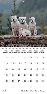 American Bulldog (Wall Calendar 2019 300 × 300 mm Square) - Produktdetailbild 3