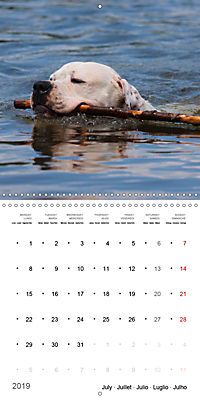 American Bulldog (Wall Calendar 2019 300 × 300 mm Square) - Produktdetailbild 7