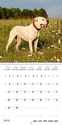 American Bulldog (Wall Calendar 2019 300 × 300 mm Square) - Produktdetailbild 4