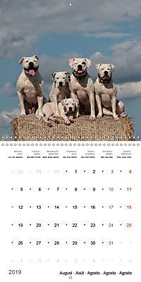 American Bulldog (Wall Calendar 2019 300 × 300 mm Square) - Produktdetailbild 8