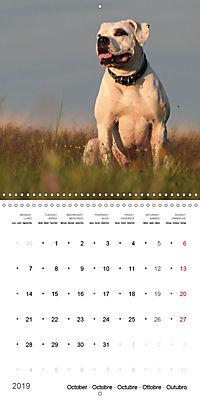 American Bulldog (Wall Calendar 2019 300 × 300 mm Square) - Produktdetailbild 10