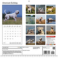 American Bulldog (Wall Calendar 2019 300 × 300 mm Square) - Produktdetailbild 13