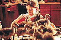 Amy und die Wildgänse - Produktdetailbild 8