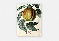 An Apple A Day Kalender 2019 - Produktdetailbild 2