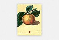 An Apple A Day Kalender 2019 - Produktdetailbild 16