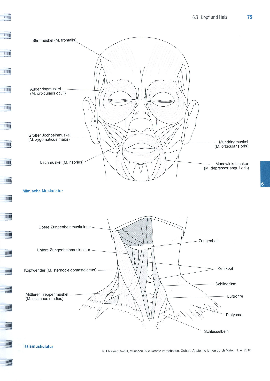 37 Anatomie Zum Ausmalen Besten Bilder Von Ausmalbilder