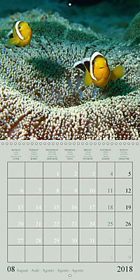 Anemonefish - face to face (Wall Calendar 2018 300 × 300 mm Square) - Produktdetailbild 8
