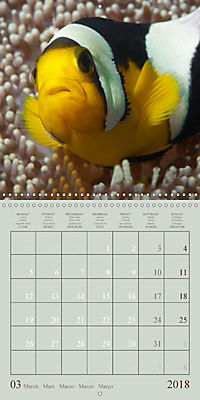 Anemonefish - face to face (Wall Calendar 2018 300 × 300 mm Square) - Produktdetailbild 3
