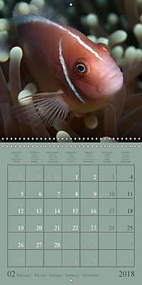Anemonefish - face to face (Wall Calendar 2018 300 × 300 mm Square) - Produktdetailbild 2