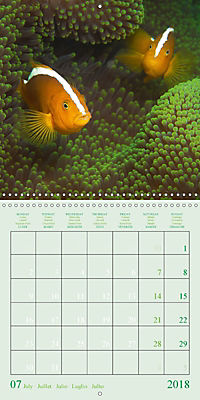 Anemonefish - face to face (Wall Calendar 2018 300 × 300 mm Square) - Produktdetailbild 7