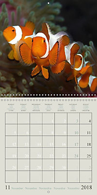 Anemonefish - face to face (Wall Calendar 2018 300 × 300 mm Square) - Produktdetailbild 11