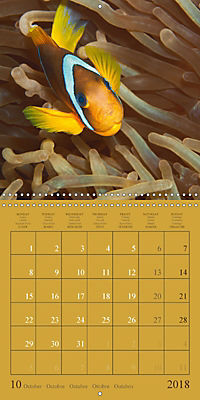 Anemonefish - face to face (Wall Calendar 2018 300 × 300 mm Square) - Produktdetailbild 10