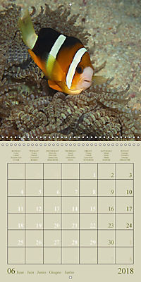 Anemonefish - face to face (Wall Calendar 2018 300 × 300 mm Square) - Produktdetailbild 6