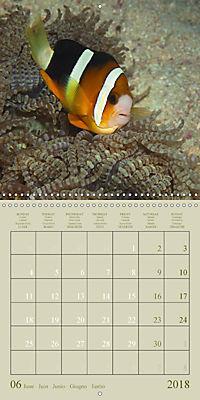 Anemonefish - face to face (Wall Calendar 2018 300 × 300 mm Square) - Produktdetailbild 6
