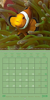 Anemonefish - face to face (Wall Calendar 2018 300 × 300 mm Square) - Produktdetailbild 9