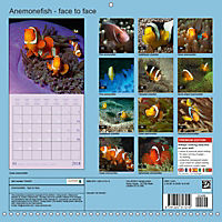 Anemonefish - face to face (Wall Calendar 2018 300 × 300 mm Square) - Produktdetailbild 13