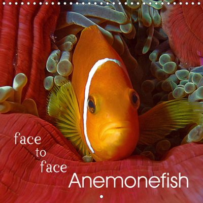 Anemonefish - face to face (Wall Calendar 2019 300 × 300 mm Square), Ute Niemann
