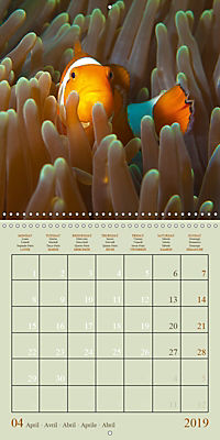 Anemonefish - face to face (Wall Calendar 2019 300 × 300 mm Square) - Produktdetailbild 4