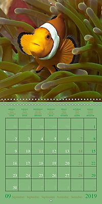 Anemonefish - face to face (Wall Calendar 2019 300 × 300 mm Square) - Produktdetailbild 9