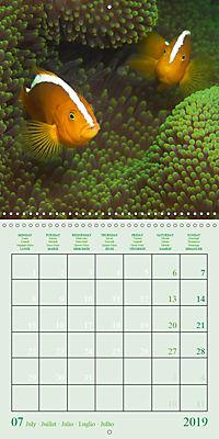 Anemonefish - face to face (Wall Calendar 2019 300 × 300 mm Square) - Produktdetailbild 7
