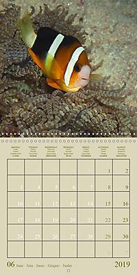 Anemonefish - face to face (Wall Calendar 2019 300 × 300 mm Square) - Produktdetailbild 6