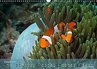 Anemonenfische - Streitbare Gesellen (Wandkalender 2019 DIN A3 quer) - Produktdetailbild 1