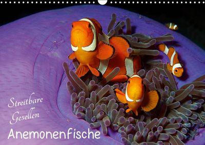 Anemonenfische - Streitbare Gesellen (Wandkalender 2019 DIN A3 quer), Ute Niemann