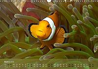 Anemonenfische - Streitbare Gesellen (Wandkalender 2019 DIN A3 quer) - Produktdetailbild 3
