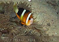 Anemonenfische - Streitbare Gesellen (Wandkalender 2019 DIN A3 quer) - Produktdetailbild 4