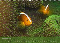 Anemonenfische - Streitbare Gesellen (Wandkalender 2019 DIN A3 quer) - Produktdetailbild 10