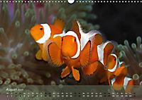 Anemonenfische - Streitbare Gesellen (Wandkalender 2019 DIN A3 quer) - Produktdetailbild 8