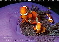Anemonenfische - Streitbare Gesellen (Wandkalender 2019 DIN A3 quer) - Produktdetailbild 12