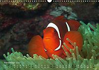 Anemonenfische - Streitbare Gesellen (Wandkalender 2019 DIN A3 quer) - Produktdetailbild 11