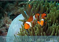 Anemonenfische - Streitbare Gesellen (Wandkalender 2019 DIN A2 quer) - Produktdetailbild 1