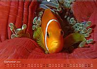 Anemonenfische - Streitbare Gesellen (Wandkalender 2019 DIN A2 quer) - Produktdetailbild 9