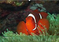 Anemonenfische - Streitbare Gesellen (Wandkalender 2019 DIN A2 quer) - Produktdetailbild 11