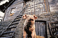 Animal Farm - Farm der Tiere - Produktdetailbild 1