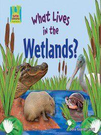 Animal Habitats: What Lives in the Wetlands?, Oona Gaarder-Juntti