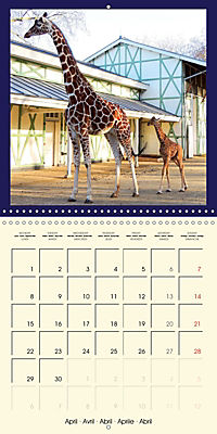 Animal nature (Wall Calendar 2019 300 × 300 mm Square) - Produktdetailbild 4