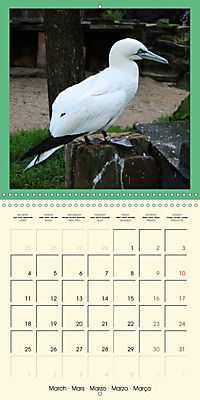 Animal nature (Wall Calendar 2019 300 × 300 mm Square) - Produktdetailbild 3