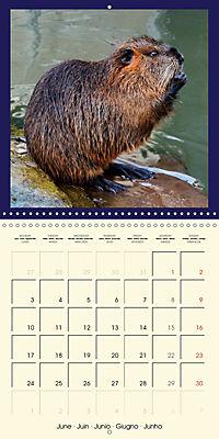 Animal nature (Wall Calendar 2019 300 × 300 mm Square) - Produktdetailbild 6