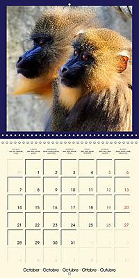 Animal nature (Wall Calendar 2019 300 × 300 mm Square) - Produktdetailbild 10