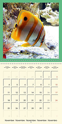 Animal nature (Wall Calendar 2019 300 × 300 mm Square) - Produktdetailbild 11