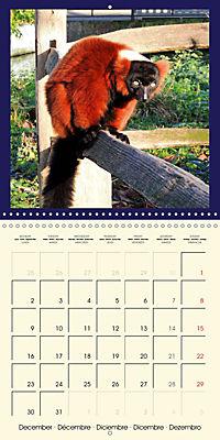 Animal nature (Wall Calendar 2019 300 × 300 mm Square) - Produktdetailbild 12