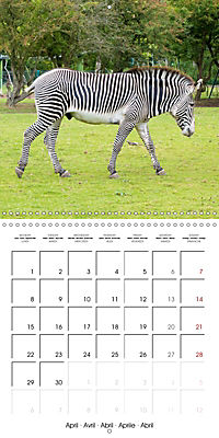 Animals from the Zoo (Wall Calendar 2019 300 × 300 mm Square) - Produktdetailbild 4